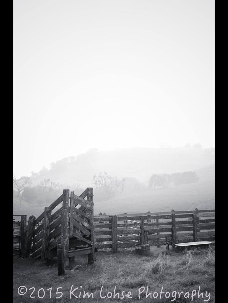 Fog and old fences.... Perfection.