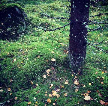 Moss. Lena Losciale. Sweden