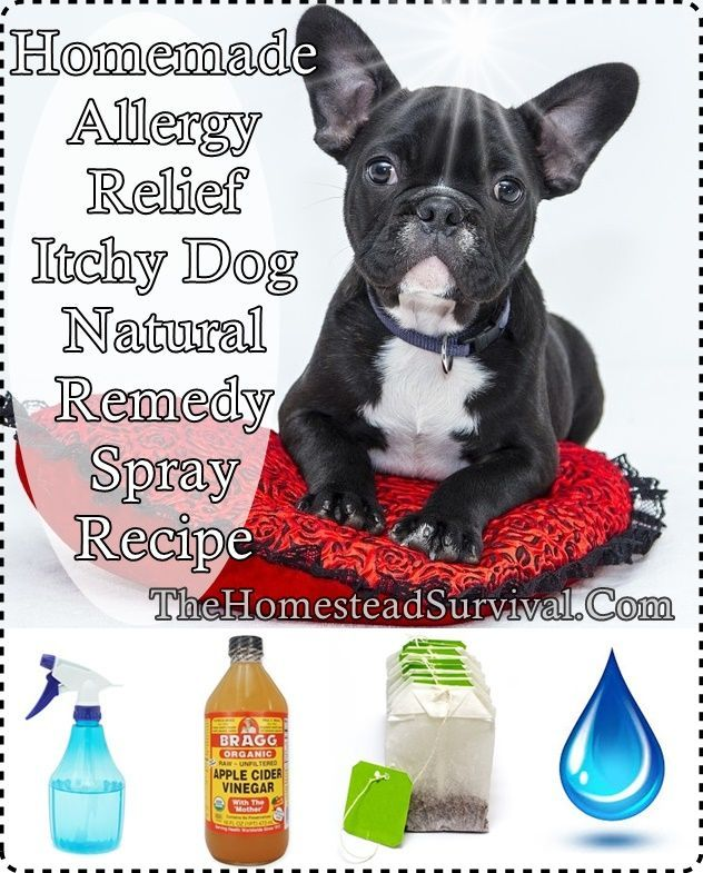 This homemade allergy relief itchy dog natural remedy spray recipe is a wonderfully soothing solution for your dog's irritated skin. With simple ingredient