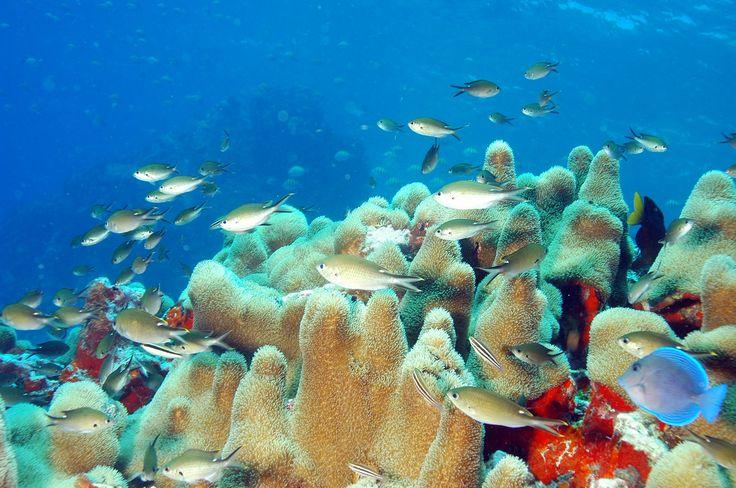 Top 10 Fun Things To Do In St. Maarten   St maarten