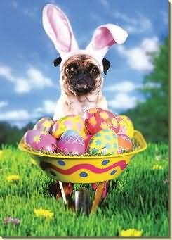 Pug with Easter Wheelbarrow