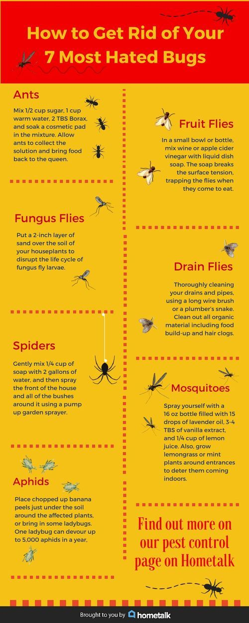 Save So Much $ And Time ! The Complete Household go-to guide for getting rid of your 7 Most Hated Bugs !