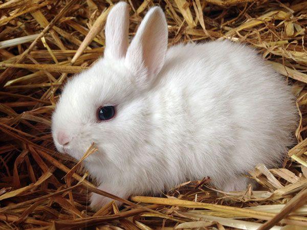 Kaninchen Kaufen Munchen Zwergkaninchen Kaufen Munchen Zwergkaninchen Zuchter Munchen Zwergkaninchen Zwergkaninchen Kaufen Kaninchen