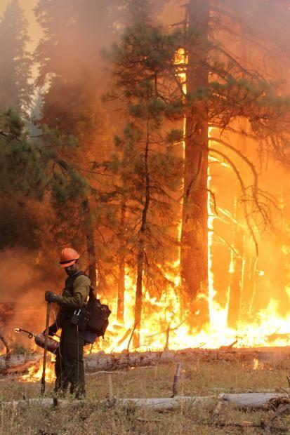 Horseshow Meadow Hotshot & Drip Torch- Rim Fire - Photo Mike McMillan USFS