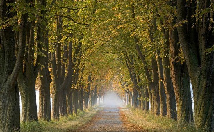 Привіт, осінь!, Ingo Arndt. Ловіть миті на Яндекс.Зображеннях.