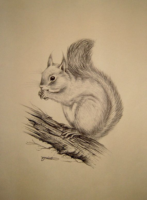 Vintage Ink Sketch Drawing of a Squirrel by QueensParkVintage