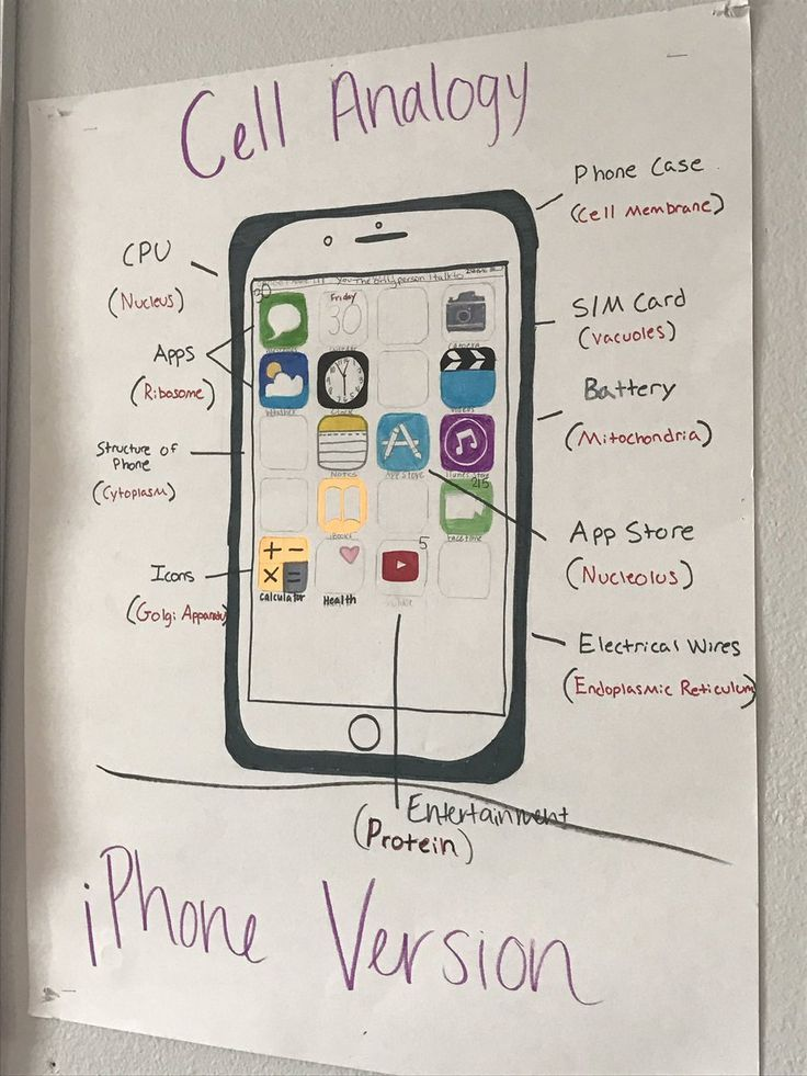Analogy of the cell with an iPhone related image