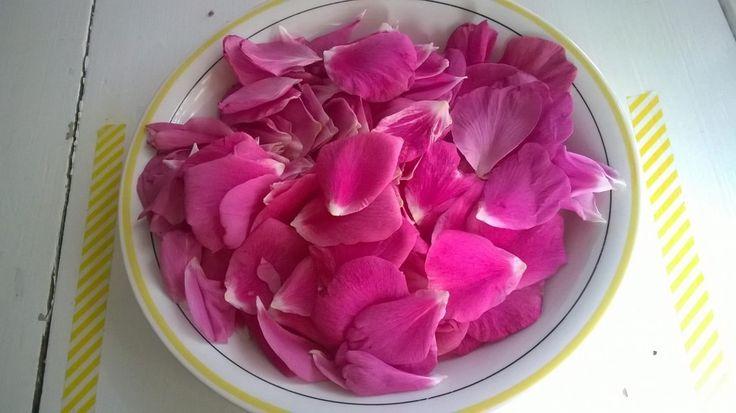 Ruusutee on valloittava terveysjuoma