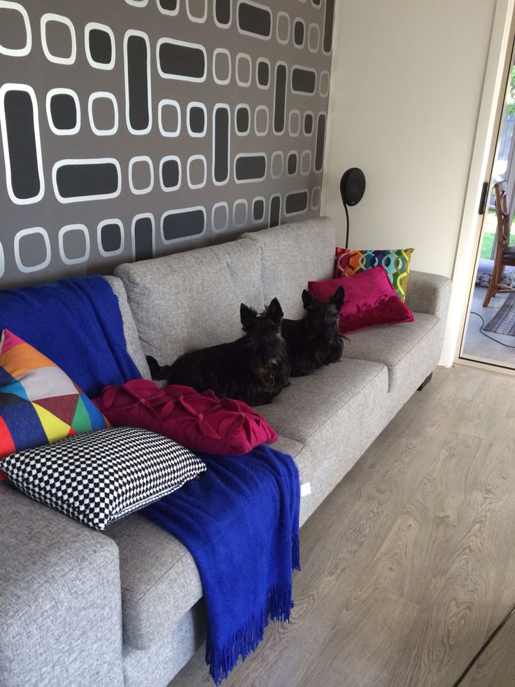 Lucy and Topsy chilling on the couch