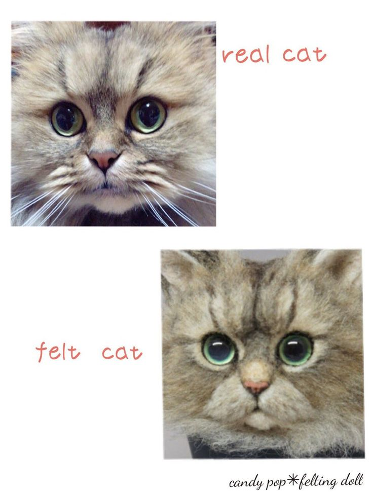 candy pop✳︎羊毛フェルト猫(@candypop_amr)さん | Twitter