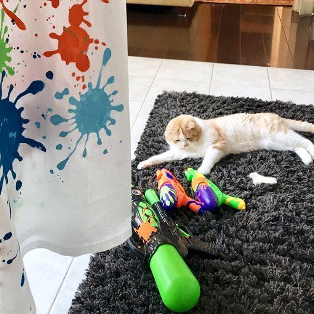🌻にゃんだこれ❓タッチ😸🐾🔫🎽 #👕#仮装大会#スプラトゥーン#Tシャツ#スプラトゥーンフェス #お姉ちゃんの手作りTシャツ#水鉄砲#🔫#夏#🌻#ミータ始めての🔫#ペイント#猫#🐈#愛猫#猫との暮らし#ねこすた#ねこ部 #スコティッシュ#スコ#はちわれ部 #catlove #cat #kitty #scottish