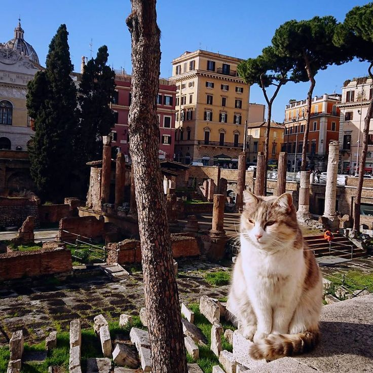 Stumbled across this regal gent whilst sightseeing in Rome. No pats, too busy enticinf tourists to come over and admire the ruins. 10/10 very dignified