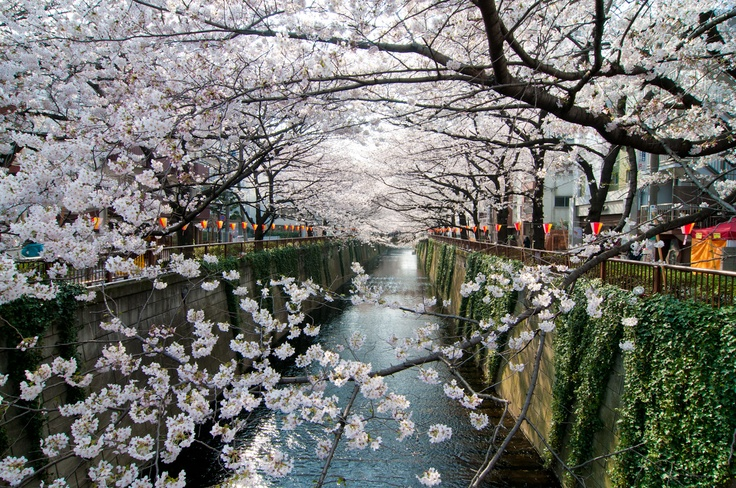 Can't miss the beautiful cherry blossom season of April. That's one of the best seasons you might want to visit us.