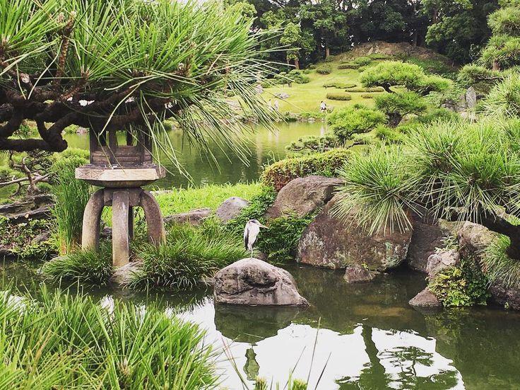 おつかれさま〜 先週の土曜日、清澄庭園に見つけた鶴と同様な内なる平和が欲しいな〜 たまに来るけど、あまり長く残らないなぁ! #鶴 #清澄庭園 #門前仲町 #庭園 #東京 #日本 #自然 #기요수미 #몬센나가쵸 #도쿄 #일본 #crane #kiyosumishirakawa #monzennakacho #garden #tokyo #japan #nature