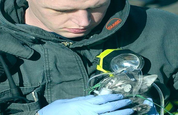#inspiracionUdever | Esta bombero encontró un gatito en un encendió, así lo puso una mascara de oxigeno.