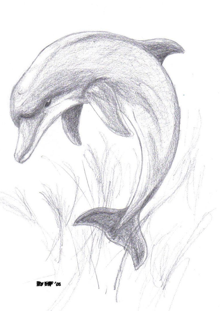 Images for pencil drawings of dolphins