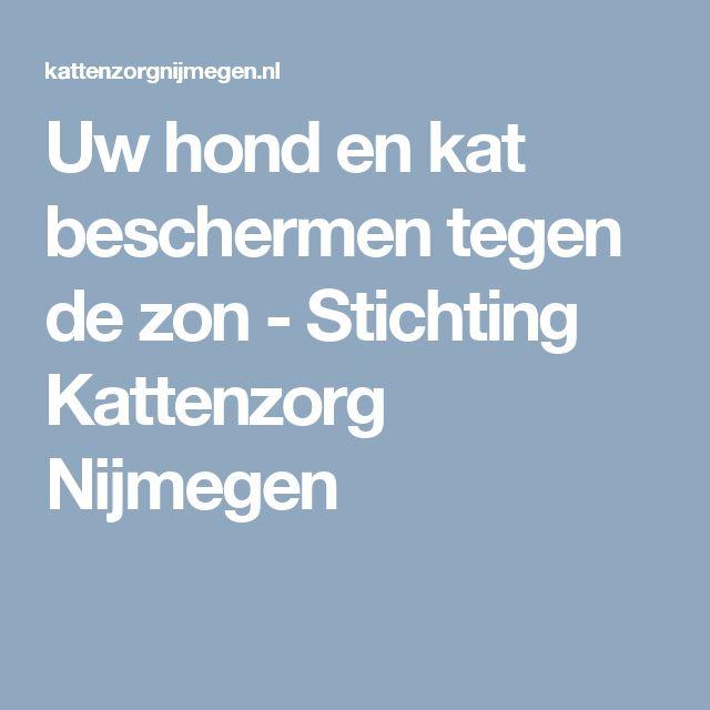 Uw hond en kat beschermen tegen de zon - Stichting Kattenzorg Nijmegen