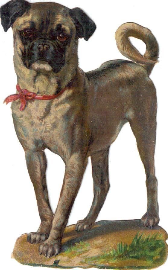 Larger Victorian Die Cut Scrap Pug Dog w Red Bow c1880s
