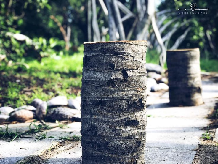 Célèbre Les 25 meilleures idées de la catégorie Déforestation sur  SR45