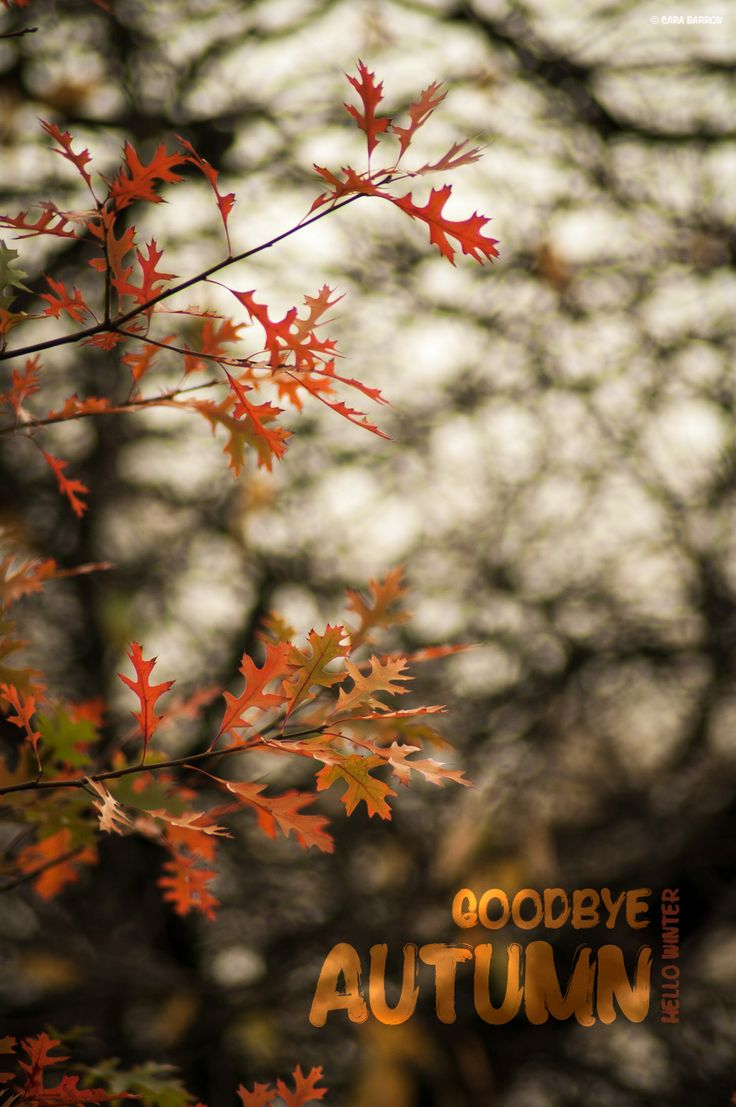 Goodbye Autumn, hello Winter... the golden colours of autumn are quickly turning to grey