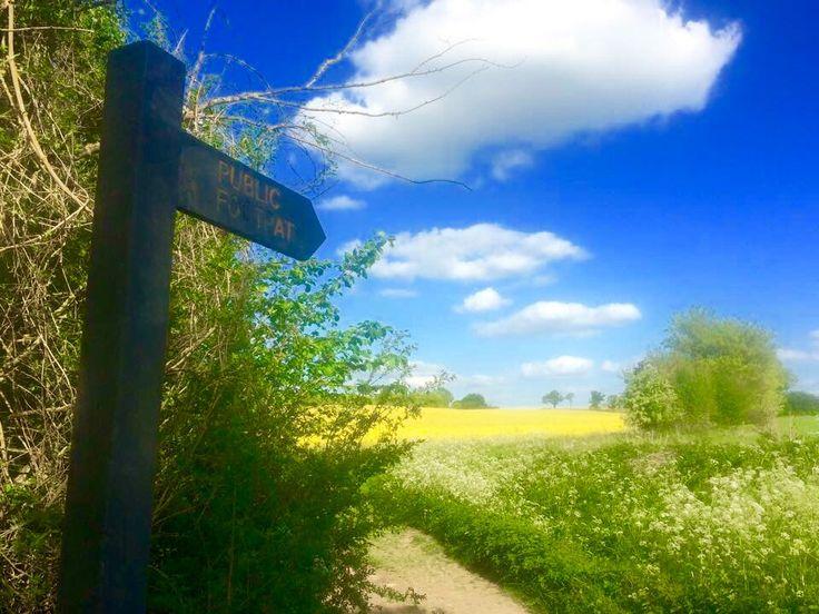 Rapeseed field in Saffron Walden, Essex
