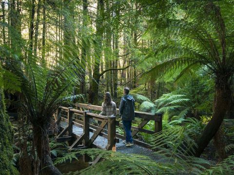 Cumberland Walk, Yarra Valley and Dandenong Ranges, Victoria, Australia