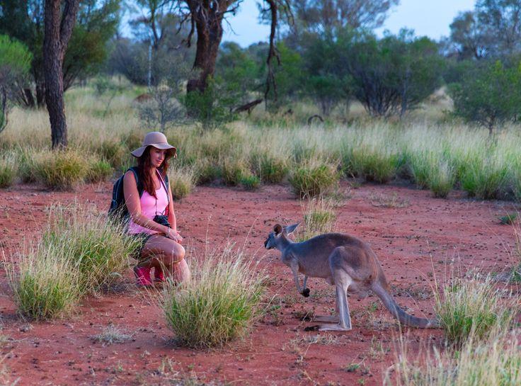 The Kangaroo Sanctuary in Alice Springs