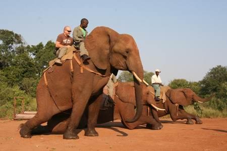 Elephant Encounter  http://www.afrizim.com/Activities/