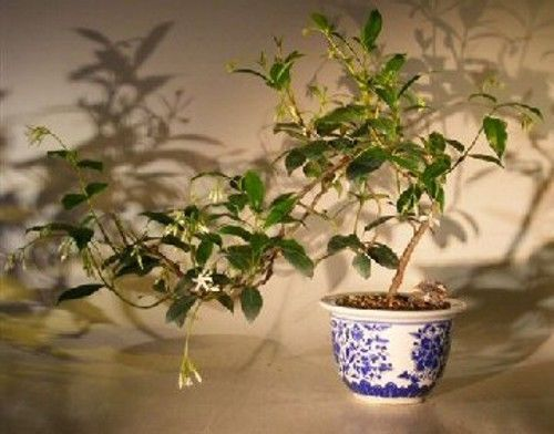 miniature bonsai tree kit urban outfitters instructions