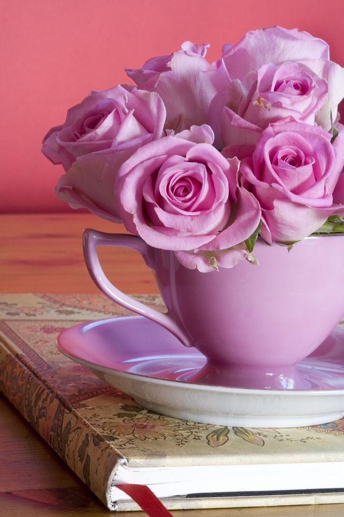 войны настой доброе утро картинки розовые розы девочке