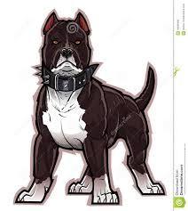 Resultado de imagen para perros pitbull blanco y negro