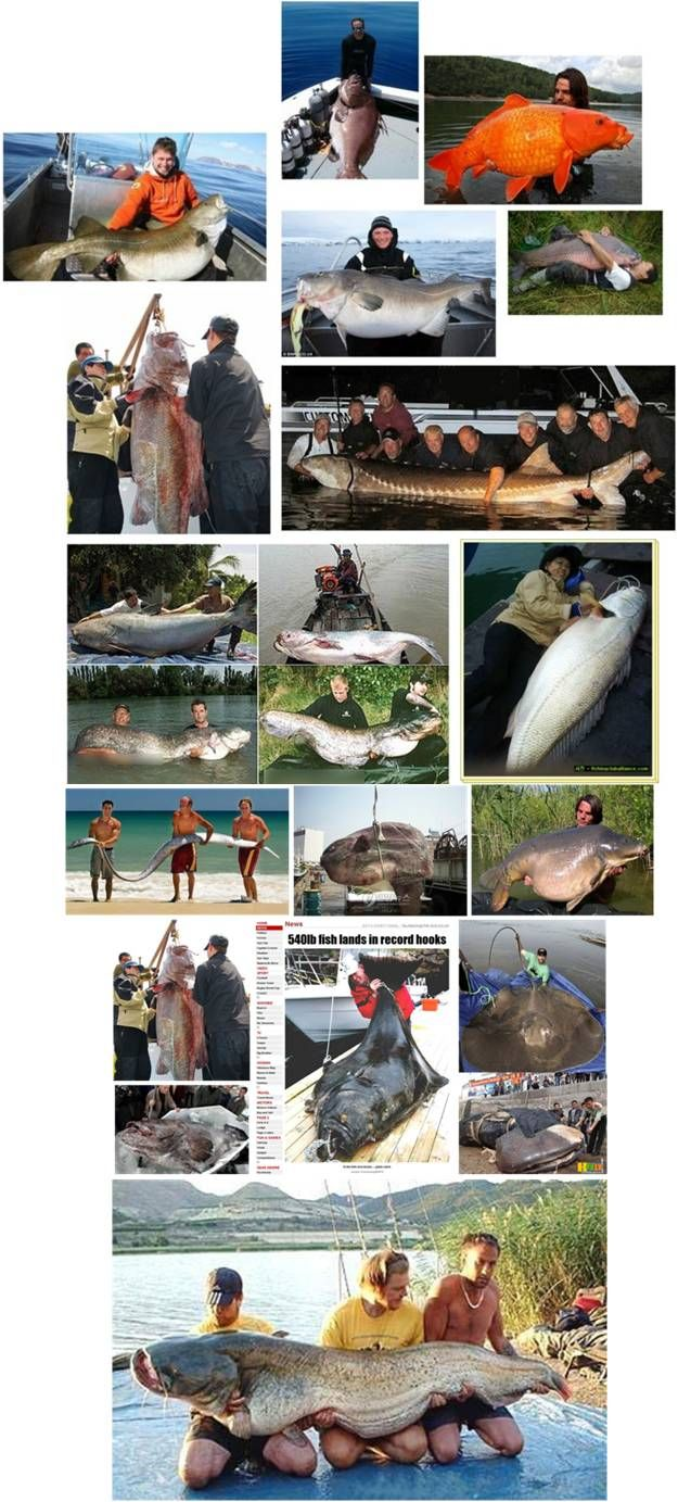 세상의 큰물고기들은 다 모였다. 이름하여 ' 진격의 물고기' 함께 감상해보실까요?