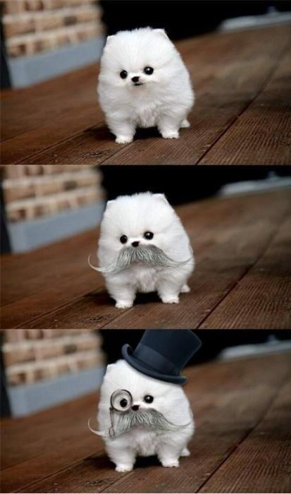 Small Dog...going incognito!