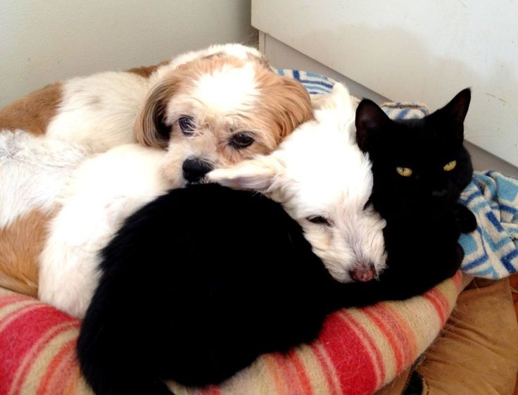 Dog And Cat Haven