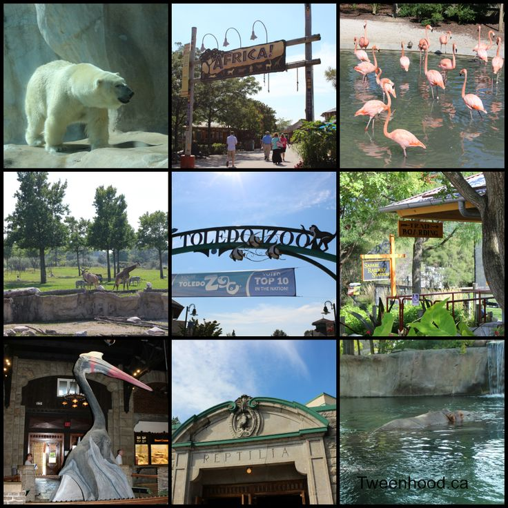 Top 5 things to do in Toledo Ohio with kids, including visiting the Toledo Zoo (one of the top rated zoos in the United States)