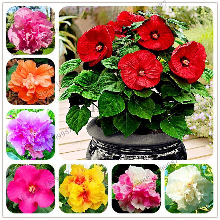 más de 25 ideas increíbles sobre flores de hibisco en pinterest