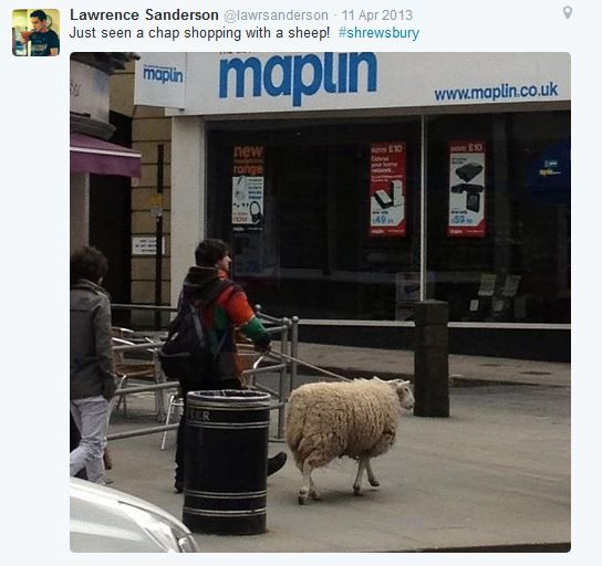 Sheep shopping near Maplin by twitter user @lawrsanderson
