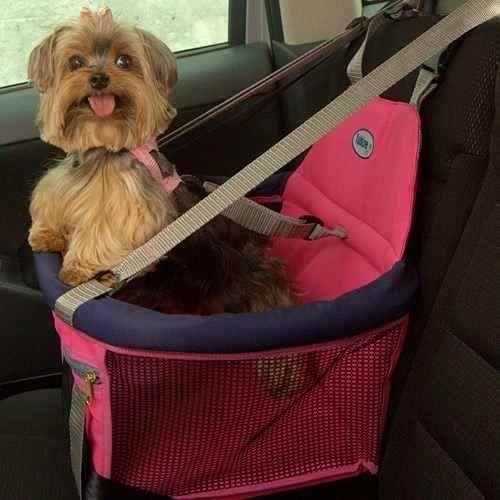 Transporte de cães: como levá-los no carro de maneira segura?