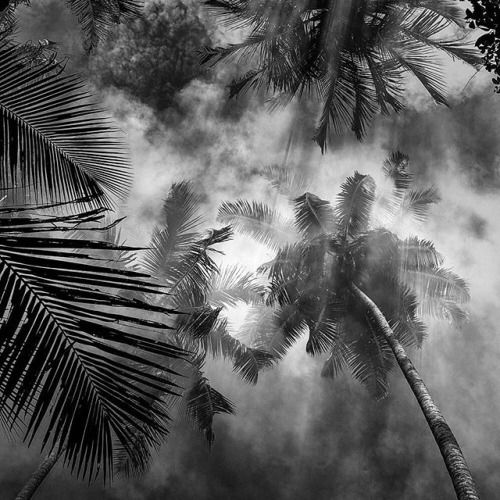Morning Dance photographed by Hasselblad Master Hengki Koentjoro (@hengki_koentjoro_images) on his Hasselblad 503CW with 80mm lens Kodak Tmax 400  This scene was captured as people on Nias Island North of Sumatra were using smoke to chase the mosquitos away.  I love the effect of the smoke on the coconut trees; the light rays create a special nuance of glorious beauty.  Are you the next Hasselblad Master? Link in bio to learn more and to enter the competition! | #hasselblad #mediumformat…