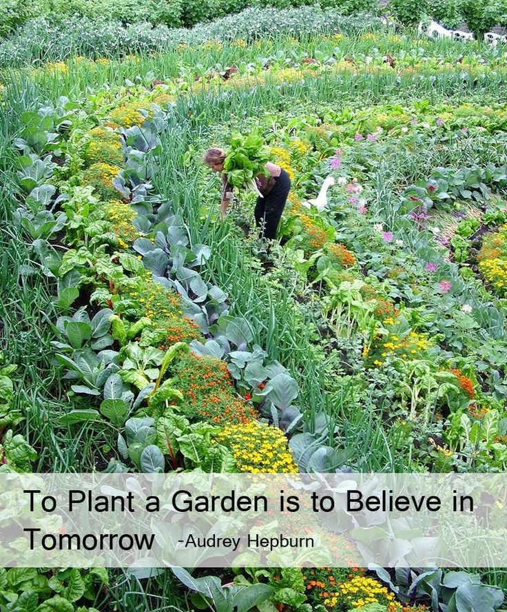 24 Best Images About Www Garden Samples On Pinterest