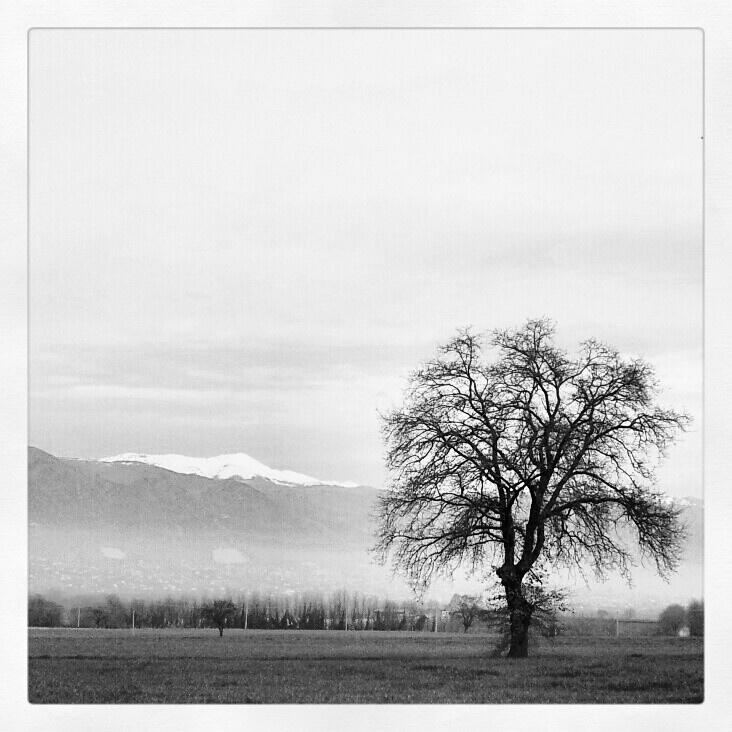 L'albero d'inverno