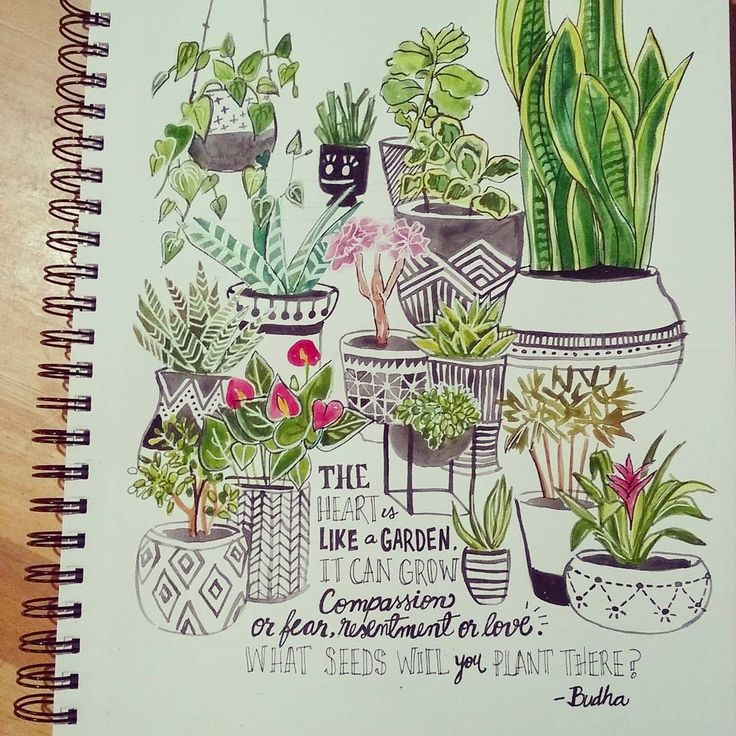 house plants drawing. day 24 house plants i had the intention of making this one a little drawing