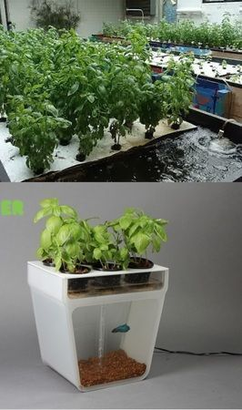 What is Aquaponics? And how to get your own Home Aquaponics Kit #HomeAquaponics