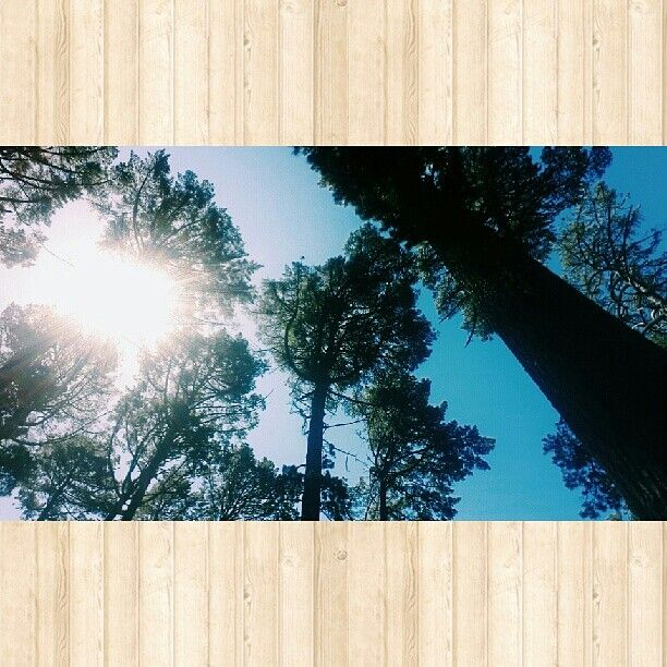 Beautiful day at Newlands forest