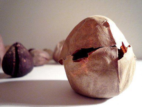 aguacate semilla rosmary