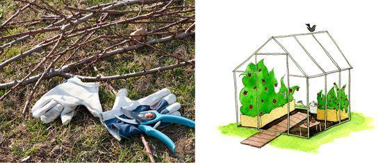 Gartentipps im Februar: Nutzgarten - Gartenzauber