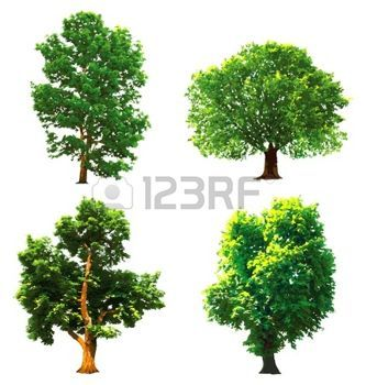 eiche blatt: Sammlung grünen Bäumen. Vector illustration Illustration