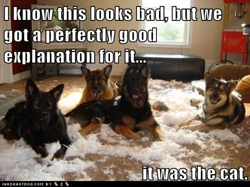 yup: Funny Dogs, Funny Pictures, Dogs Cat, Funny Stuff, Funny Quotes, Dogs Pictures, Funny Animal, German Shepherd, Dogs Funny