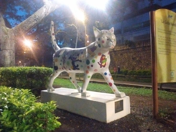 La gata bandida, Bandit cat, Cali, Colombia