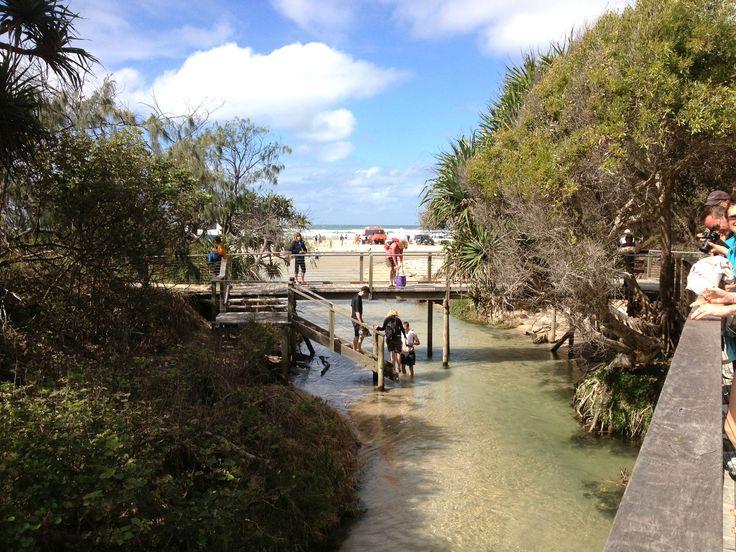 This is how we do winter at Fraser Island. Photo taken at Eli Creek. #fraserisland #frasercoast #sunshine